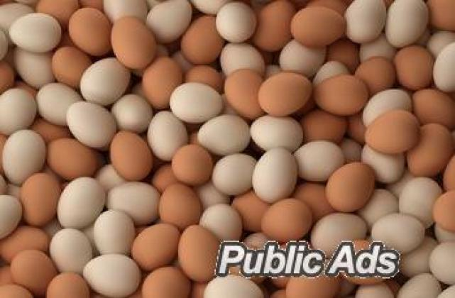 Fresh brown Shell Chicken Eggs