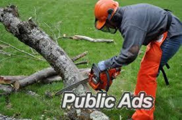 DYNAMIC TREE FELLING