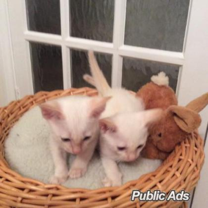 cat and kitten in Graskop, Mpumalanga