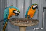 macaw parrots and parrots eggs for sale