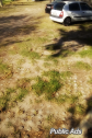 Grass Block Paving