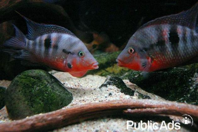 Tropical Fish in Eastern Suburbs, Gauteng