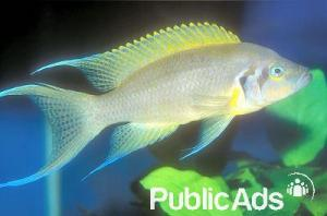 Top QualityImported Tropical Fish