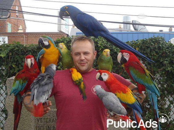 Cute hand raised parrots and fertile eggs for sale