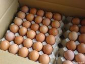 Fresh Brown & White Table Eggs for Sale