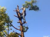 Tree felling ,Stump removal ,Bush pruning ,Trimming and Site clearing