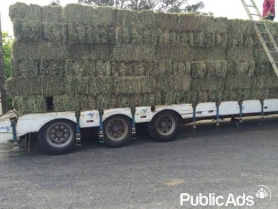Eragrostis grass A Grade 25kg bales