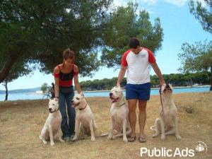 Exceptional Dogo Argentino Puppies