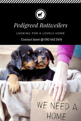 Pedigreed Rottweiler Pups