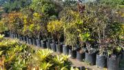 LOTUS NURSERIES - UP TO 50% OFF - EXCESS CLEARANCE SALE