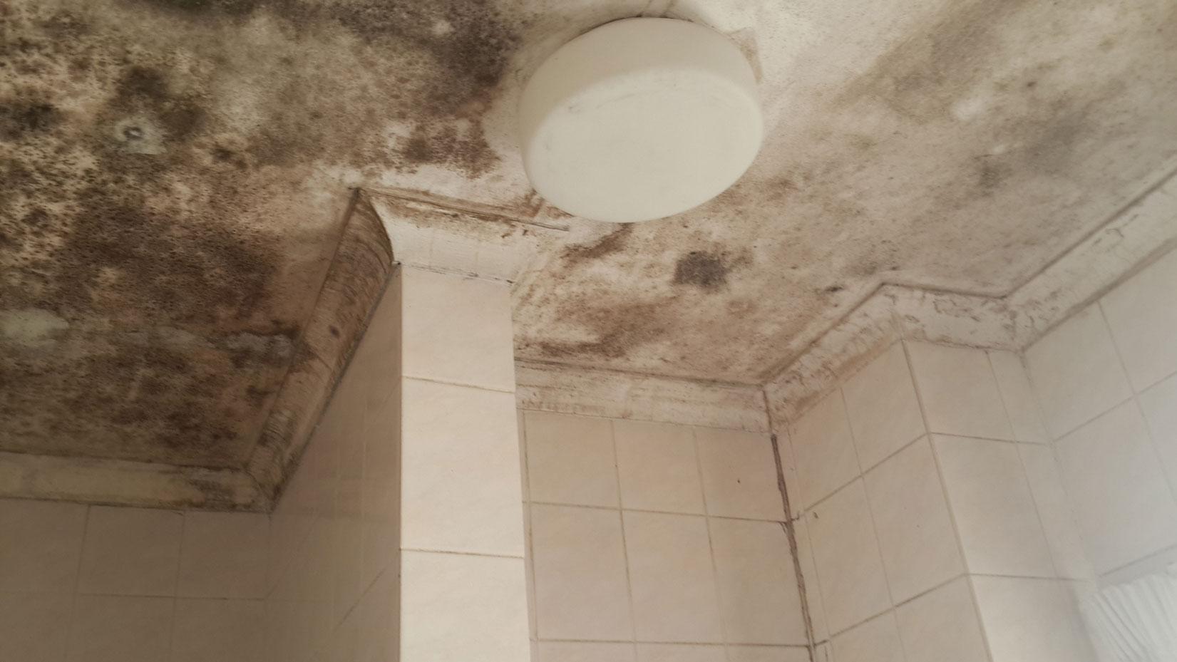 Bathroom mould mold mildew removal in randburg - Bathroom wall mold removal ...