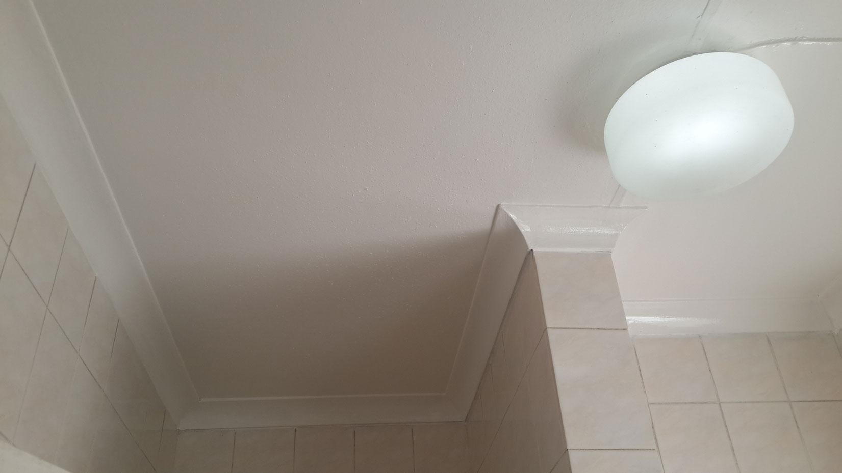 Bathroom mould mold mildew removal randburg public for Bathroom mildew removal