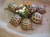 Healthy Tortoises Available For Sale