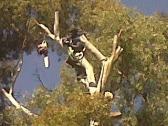 Savannah Tree Felling Company