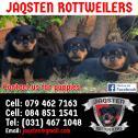 KUSA Registered rottweiler Pups for Sale