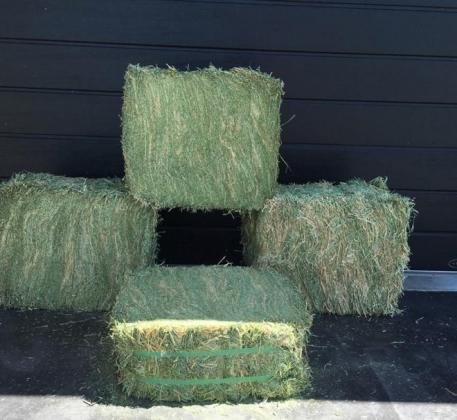 Top Premium Quality Grade A Lucerne Bales For Sale