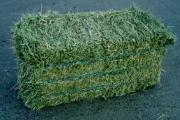 A-Grade Premium Quality Lucerne Bales For Sale