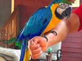 my baby macaws is 5 months old.she is a female
