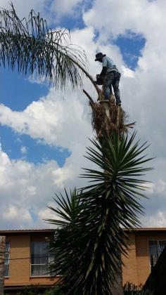 Monkey Treefelling Company