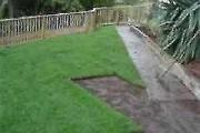 Eco Turf Instant lawn delivered and planted