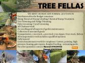 Tree Fellas Services