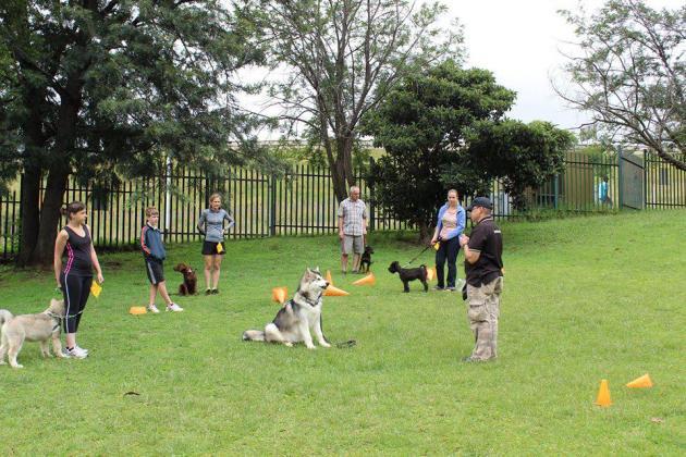 Puppy/Canine School