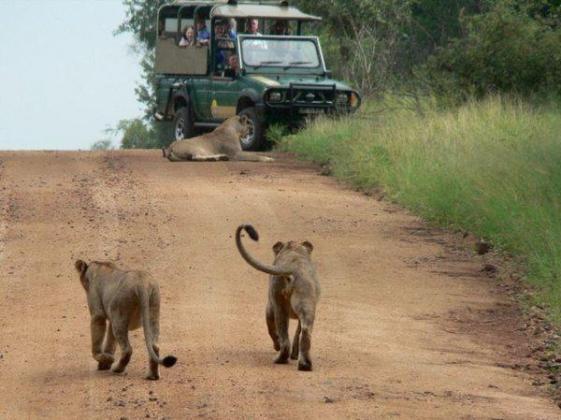 Kruger Park Safari Experts| Kruger National Park Tours & Travel
