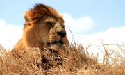 Kruger Park Safari Experts| Kruger National Park Tours & Travel