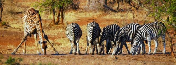 Kruger park tours: 7 Day Tour from Kruger Park to Victoria Falls