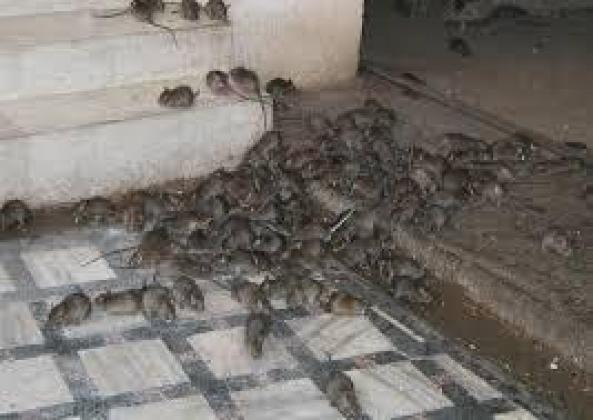 Pest Control & Fumigation Services