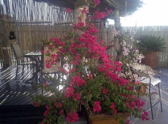 3bedroo Penthouse Sunnyside Pretoria R7000 Neg