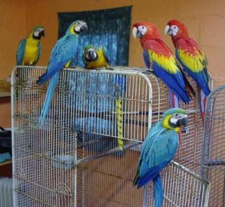 Cute hand raised parrots and fertile eggs for sale in Empuluzi, Mpumalanga