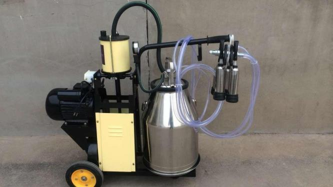 Electric Piston Milker Cows