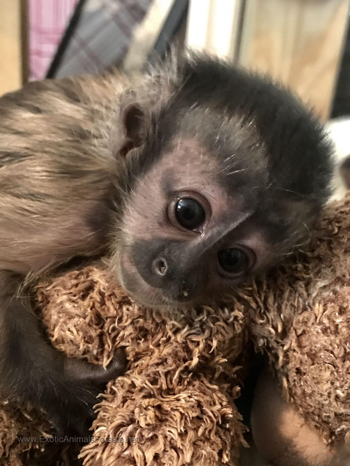 Pet Monkeys For Free – Quotes of the Day