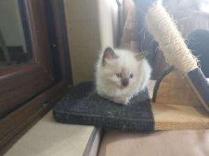Kittens 6 weeks old Free