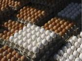 Brown and white Chicken Eggs For Sale