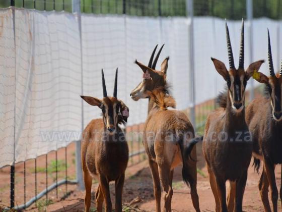 Game Boma Net in Bloemfontein, Free State