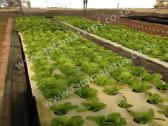 Aquaponic/ Hydroponic Grow Bed Liners