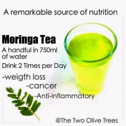 Moringa Oleifera Trees Seeds  R 60.00
