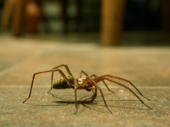 Value Pest Control - Fast, Affordable, Effective!