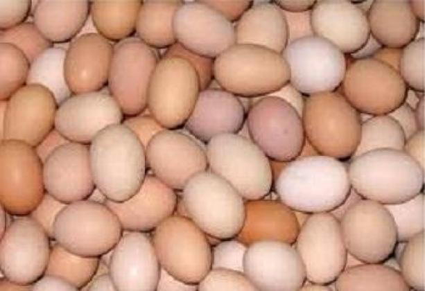 Fresh And Fertile Farm Chicken Eggs