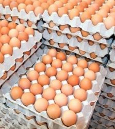 Fresh Chicken Table Eggs & Fertilized Hatching Eggs, White And Brown Eggs