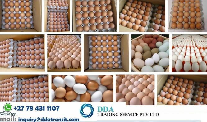 R20 per Tray Fresh Eggs / Fresh Eggs