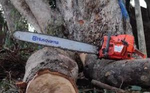 Orbit Tree Felling Cape Town, tree trimming, stump removal 0825359407