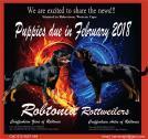 Beautifull BIG head Rotties available from R8000