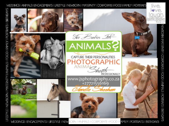 Animal Photographer-Your Fur baby Photographer in Sandton, Gauteng