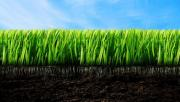 LM Grass Supplier