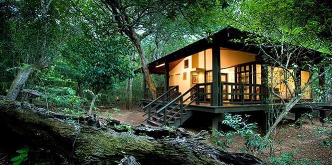 Sabi Sands safari   loveafricatravel