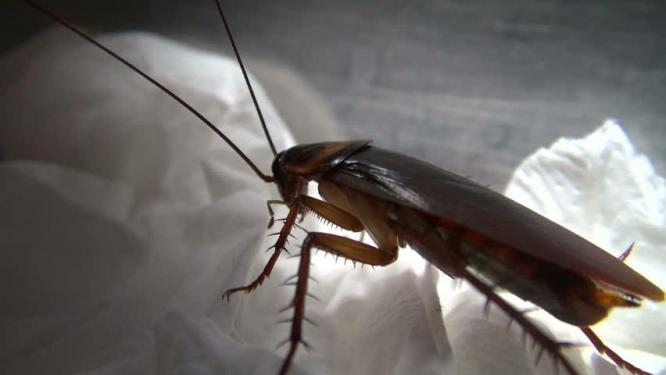 VALUE PEST CONTROL - Specialists in Pest Control Services