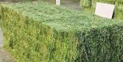 Green Alfalfa And Lucerne Hay